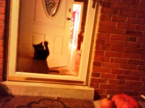 Spooky black cat, freaking out because I'm spending time on the porch and not hanging out with him.